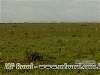 Fazenda em São José do Xingu - MT com 9000 ha.