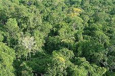 FAZENDA ÁREAS DE FLORESTA BIOMA AMAZONICO MT, AC, RO E AM