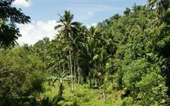 Fazenda em Resplendor - MG com 3000 hectares.