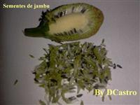 Kit 500 sementes de Jambu do Pará. Frete grátis registrado.Erva Amazônica