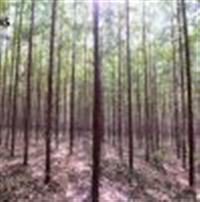 Fazenda com Reflorestamento