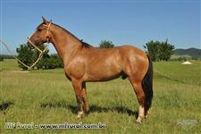 Cavalos Crioulos