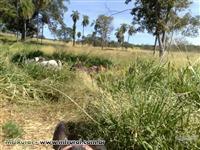 Fazenda com 1161 hectares em Campos Belos - GO.