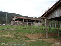 Sítio em Alfredo Wagner - SC com 88 hectares.