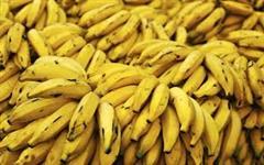 Banana da Prata/Terra