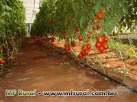 TURFA LIQUIDA SUBSTITUI 100% CAMA DE FRANGO (ESTERCO DE GALINHA)