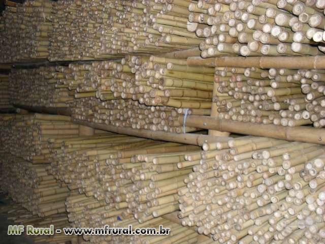 artesanato de bambu para jardim:BAMBU PARA ESTACA DE TOMATE E BAMBU TRATADO PARA MÓVEIS (Cód. 44752)