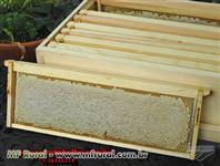 Quadros de melgueiras e ninhos novos (fabricante)
