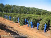 Fazenda em Luminárias - MG com 239 hectares.