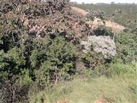 Chácaras em Muzambinho