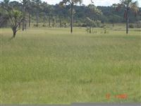 Fazenda em Sebastião Leal , sul do Piaui com 2700 ha.