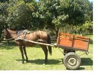 Carroça com cavalo