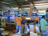 batatas maquina de beneficiar batatas para industria e mercado
