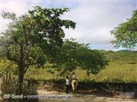 Fazenda em Jacinto - MG com 581 hectares.