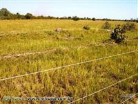 Fazenda de 200 ha com 62 mil pés de eucalypto em Dores de Indaiá - MG.
