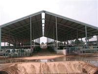 GALPÕES / COBERTURAS  PARA GADO LEITEIRO  ( FREE STALL )