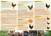 Aves caipira