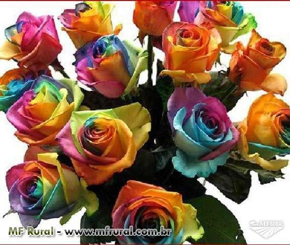 Sementes de Rosas Coloridas