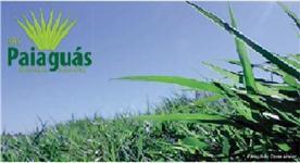 Sementes de Brachiaria brizantha cv. BRS Paiaguás Incrustadas/Tratadas - EMBRAPA