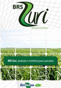 Sementes de Panicum maximum cv. BRS ZURI Incrustadas / Tratadas - EMBRAPA