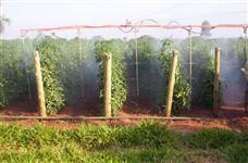 Barra centopeia Ortálicas Tomate