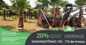PROMOÇÃO WASHINGTÔNIAS 150-170 DE TRONCO