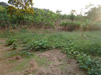 Lindo sitio em Juquiá SP Vale do Ribeira 3 hectares quase todo limpo.Barato