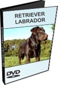 Retriever Labrador - DVD