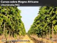 Curso de Produção de Mogno Africano