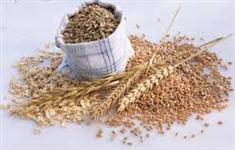 Aveia branca ótima qualidade alto teor de proteina a granel big-bag ou sacas