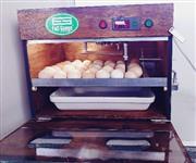 Chocadeira com Viaragem Automática Digital De 40 A 48 Ovos De Galinha