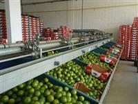 Máquinas para beneficiamento de Frutas e Legumes