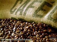 25 KG DE ADUBO COM HORMÔNIO NATURAL PARA CAFÉ