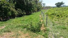 Fazenda em Vila Propicio-GO-50 Hectares-OTIMA PARA PESCA