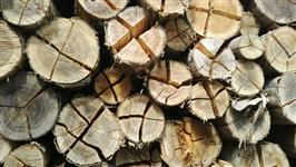 Eucalipto :florestas-caldeiras-fornos-corte-serviços