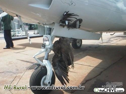 Como acabar com pombos pardais, veneno para passaros avitrol