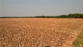 Ótima fazenda em Nova Mutum MT 38 km da cidade, 19 km da br 163