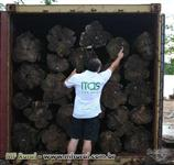 Compra e venda de Madeira de TECA