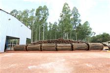 Eucalipto citriodora tratado em Autoclave, Fazenda Pindorama - Dourados MS