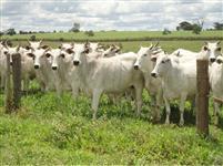 Ótima fazenda com 730ha na região de Uberaba-MG