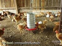 Comedouros para frangos