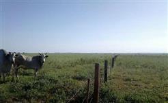 Fazenda Mineiros/Chapadão do Céu