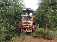 Trator Massey Ferguson 290 4x4 ano 94