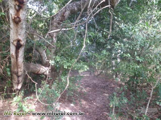 Vendo chacara beira rio dos bois em Goiás
