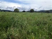 Fazenda no Pará para pecuária e agricultura