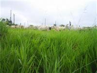 Vendo fazenda toda formada no Pará