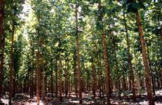 Créditos de reposição florestal