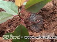 PRIME GEL - GEL PARA PLANTIO DE MUDAS COM MAIOR ABSORÇÃO DE ÁGUA
