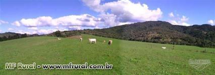 Fazenda Agropecuária com 463 hectares Planalto Norte de Santa Catarina