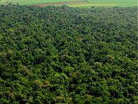 fazenda mata floresta feliz natal 30.000 ha